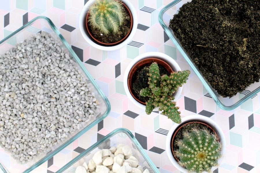 Kaktus im Glas